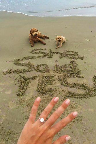 marriage proposal on the beach with cute pets