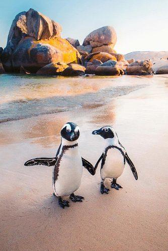 best honeymoon spots penguins beach cape town