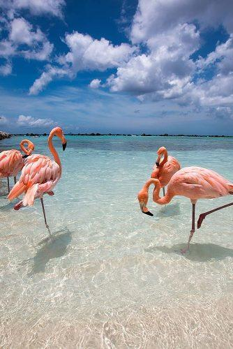 affordable honeymoon packages aruba amazing pink flamingos at the beach