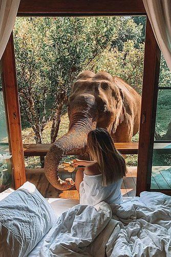 affordable honeymoon packages thailand girl feeding elephant from hotel room