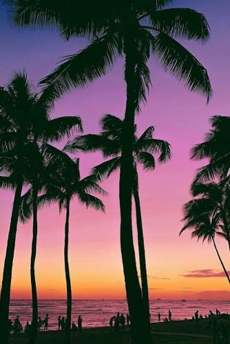 hawaii honeymoon tall palm trees on the background of a beautiful sunset sunnydays_m