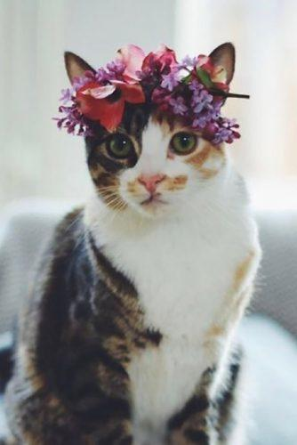 wedding pets cat in flower roseandbrideuk