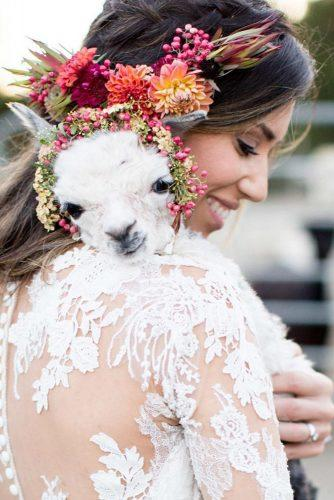 wedding pets cute lama dejoy