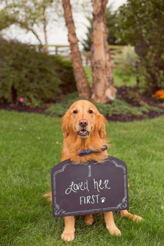 wedding pets dog with table stacey lee photography