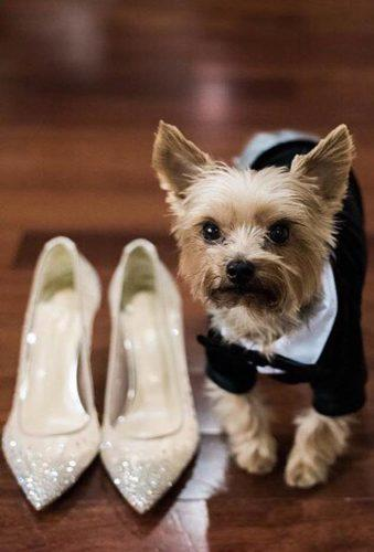wedding pets little dog with shoes insideweddings