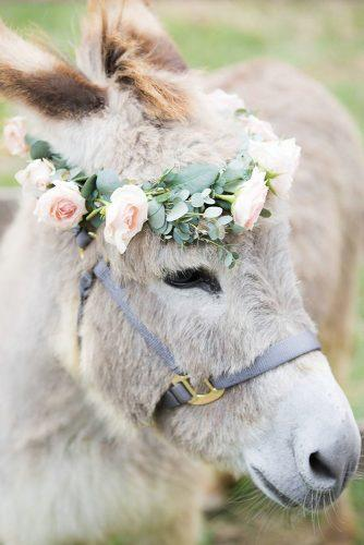 wedding pets tender lama kristinepringlephotographers