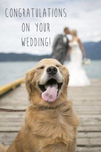 short wedding wishes funny animals