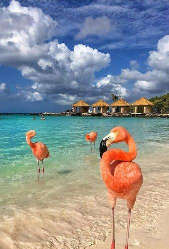 unique honeymoon destinations pink flamingo cbezerraphotos