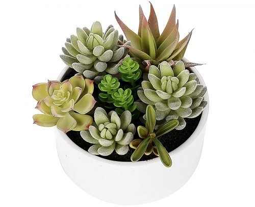 engagement party decorations decor potted succulents