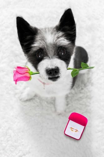 wedding trends cute dog with rose and ring
