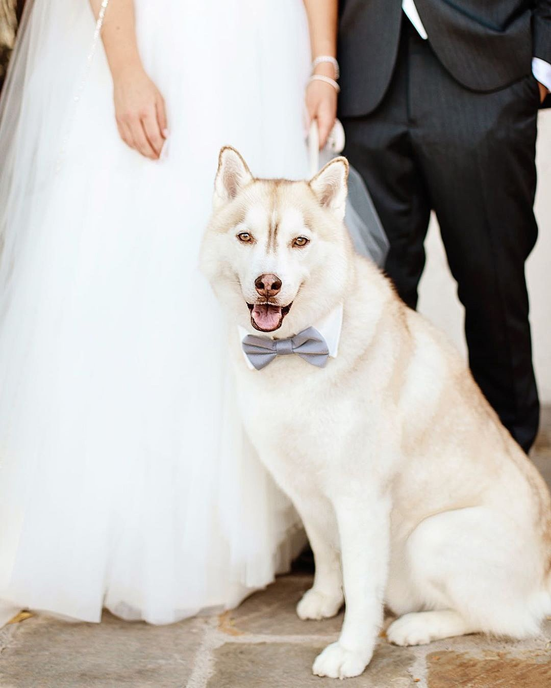 wedding trends husky at the wedding