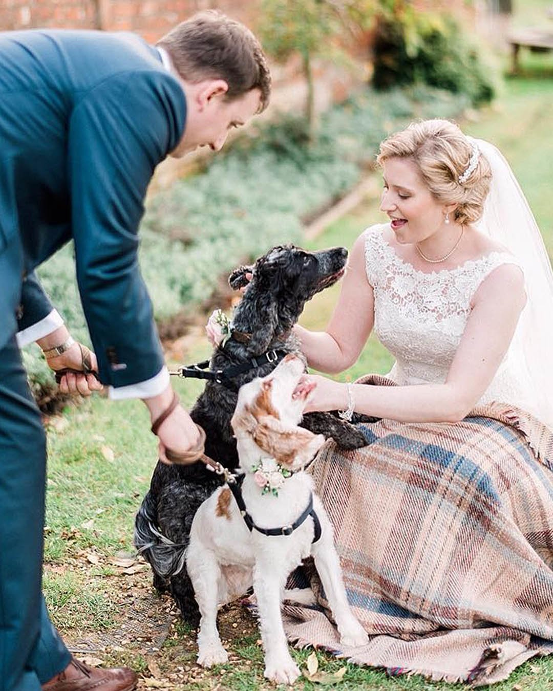 wedding trends newlyweds with dogs