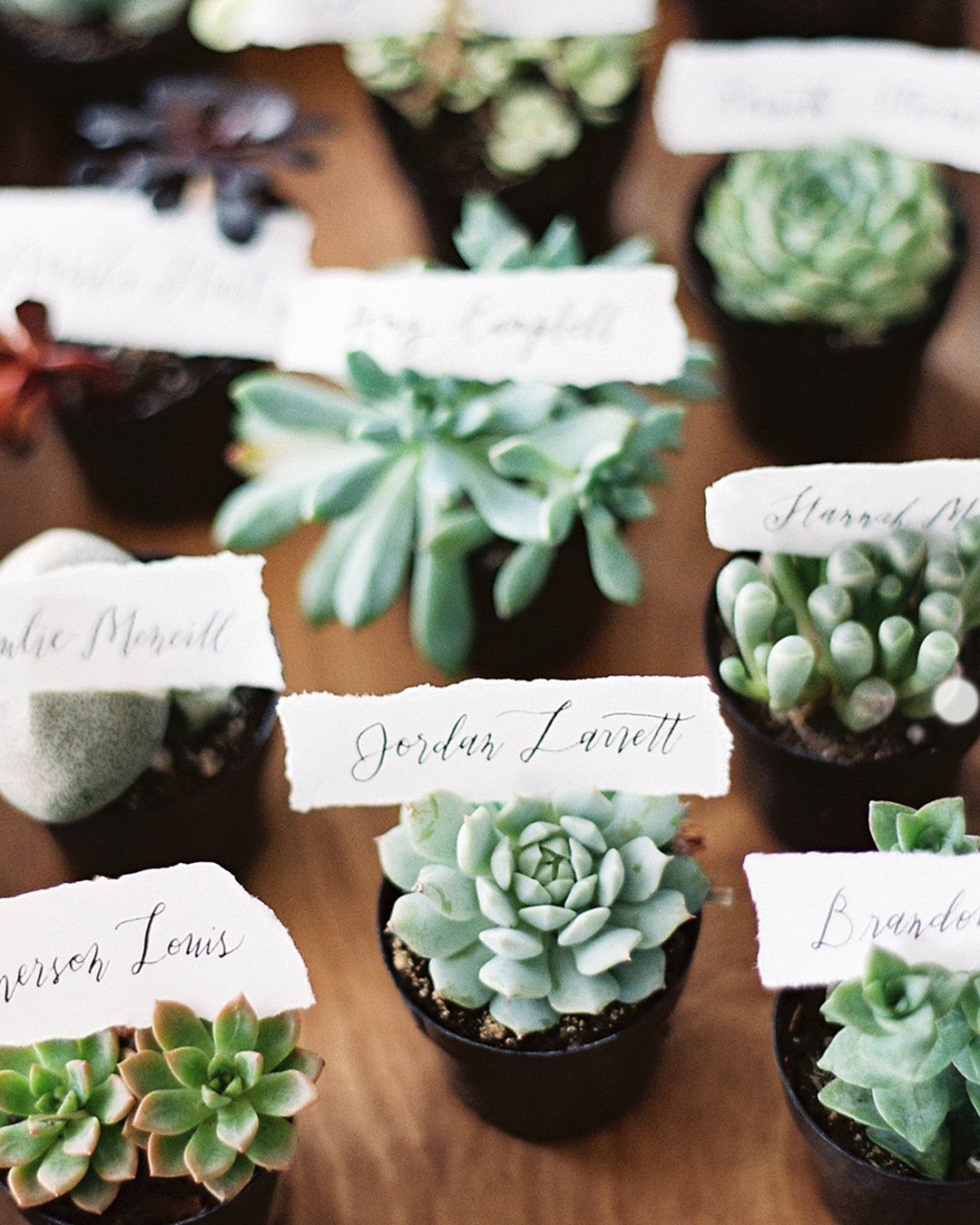 wedding trends potted succulents favors